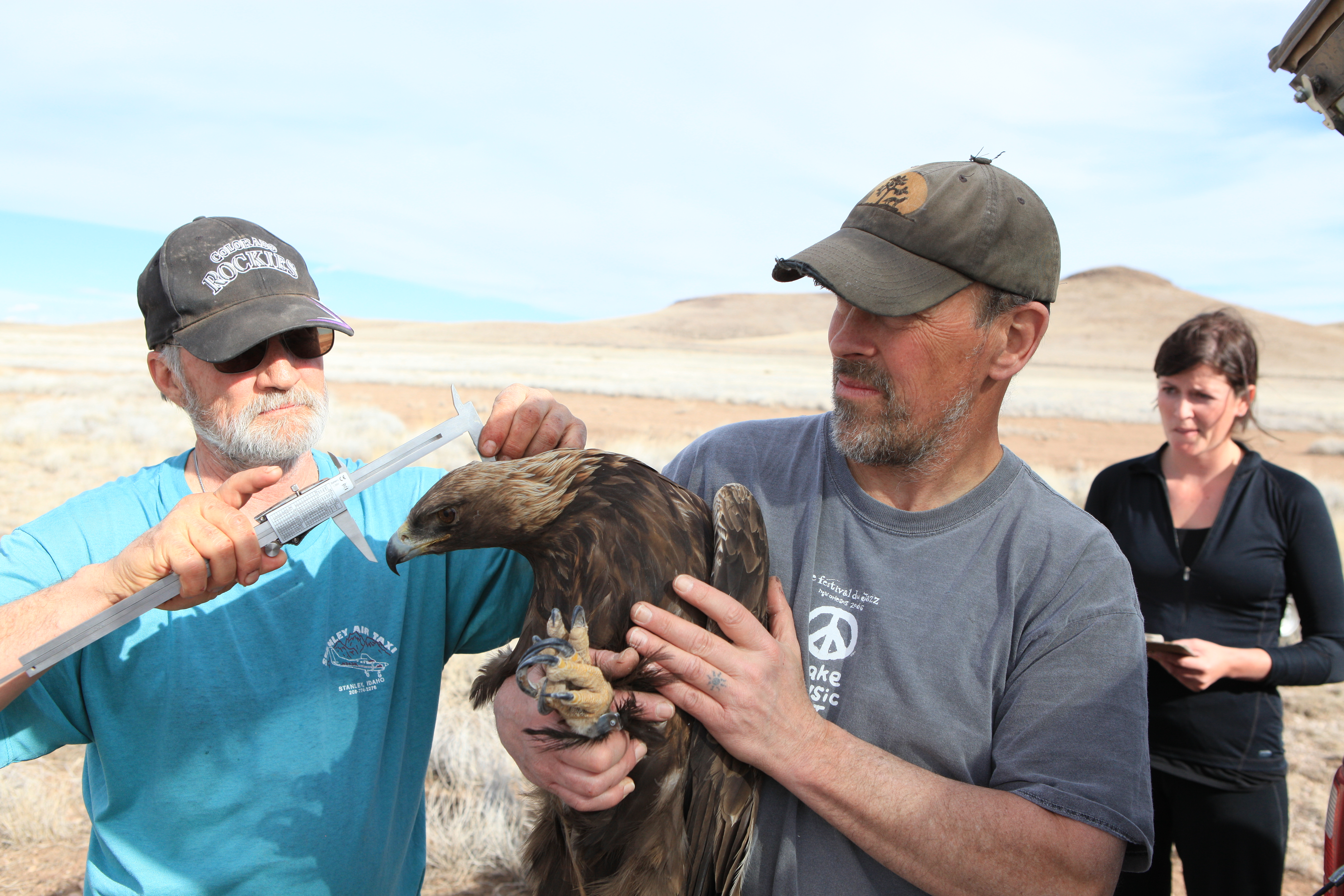 Two men measuring the head size of a golden eagle